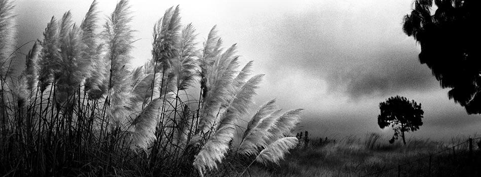 Pampas in the Mist – 325 grams fiber fine art giclee archival print – 1/20